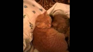 Как 2 кота брата очень любят друг друга)