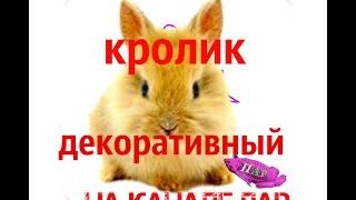 Домашние животные. Декоративный Кролик