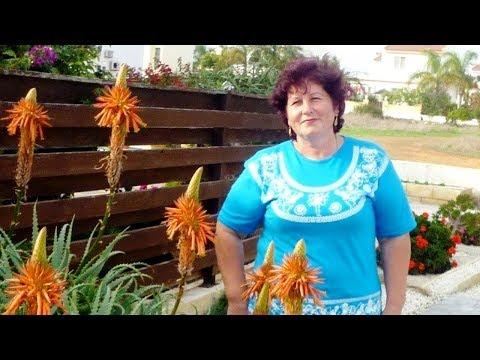 Как цветет алоэ вера в домашних условиях