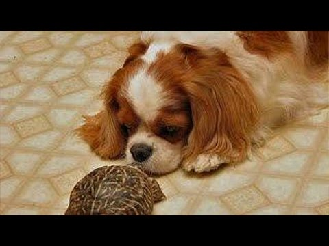 Turtles chasing cats and dogs – Funny pets compilation