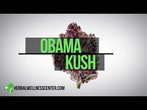 Obama Kush strain review