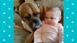Funniest Dogs FALL IN LOVE with Sweet Babies | Cute Dog and Baby