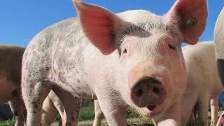 Zwierzęta dla dzieci po polsku   Nauka i odgadywanie zwierząt