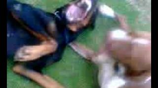 Dog Fight (Dobey VS Pittrisha) Who will win?Part4
