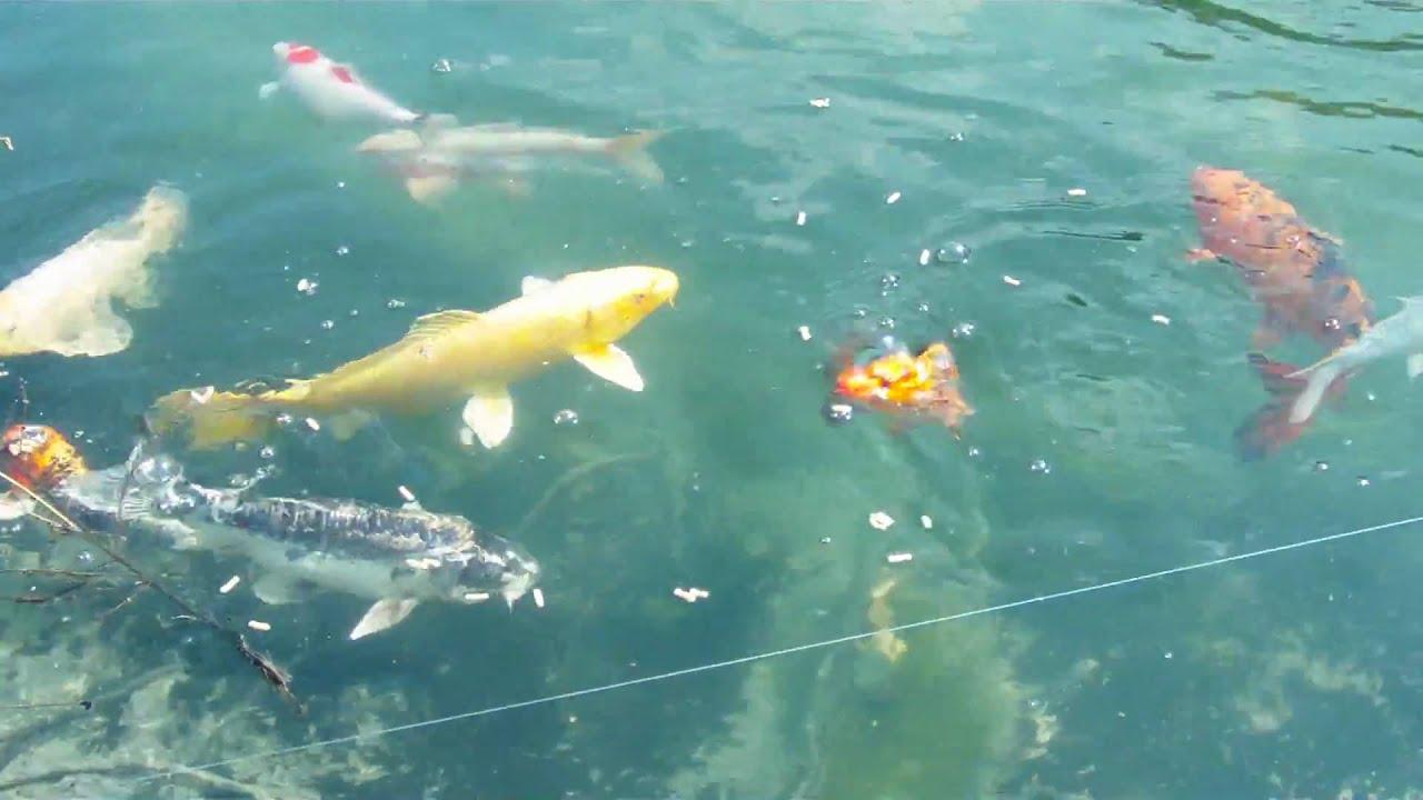 Hurraa Unser Fischteich Ist Sauber Youtube