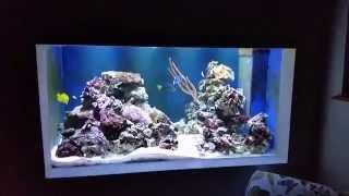 Built In Wall Marine Fish Tank, Aquarium, 220gal, 1000 Litres, 5×3×30