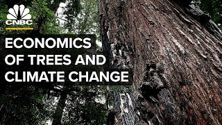 Can Planting Billions Of Trees Halt Climate Change?