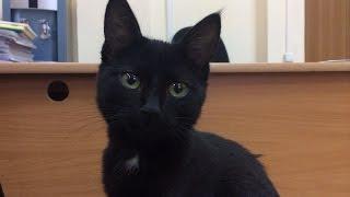 Черная кошка к деньгам