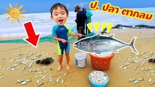 สกายเลอร์ | ป. ปลาตากลม 🦀🐟🐠 ดูชาวประมงหาปลา จับปู สัตว์ทะเลเพี้ยบเลย
