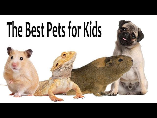 The Best Pets For Kids Youtube