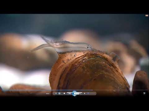 Describing How A Mantle Flap Works