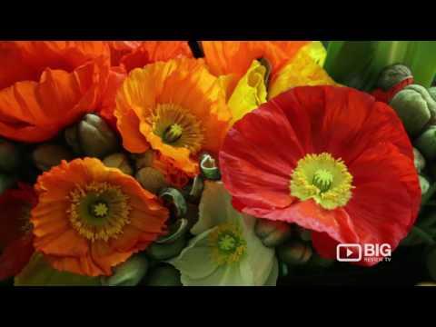Grandiflora Flowers, a Florist in Auckland for Bouquet and Flower Arrangement