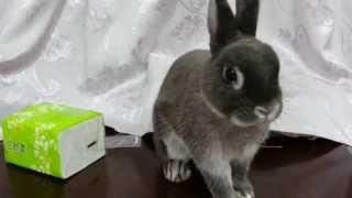 RAINBOW兔寶生氣 (Angry's Rabbit)