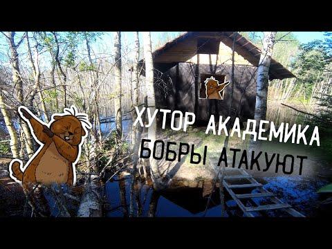 Нашли хутор академика в Карелии, бобры атакуют
