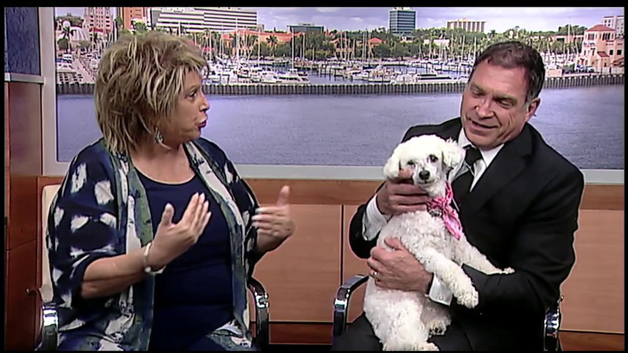 pet-of-the-week-sienna-from-florida-poodle-rescue