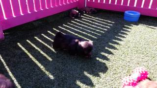 Puppy Pad: Moodles Playtime