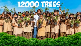 We Plant 12000 Trees And Gave It For Free
