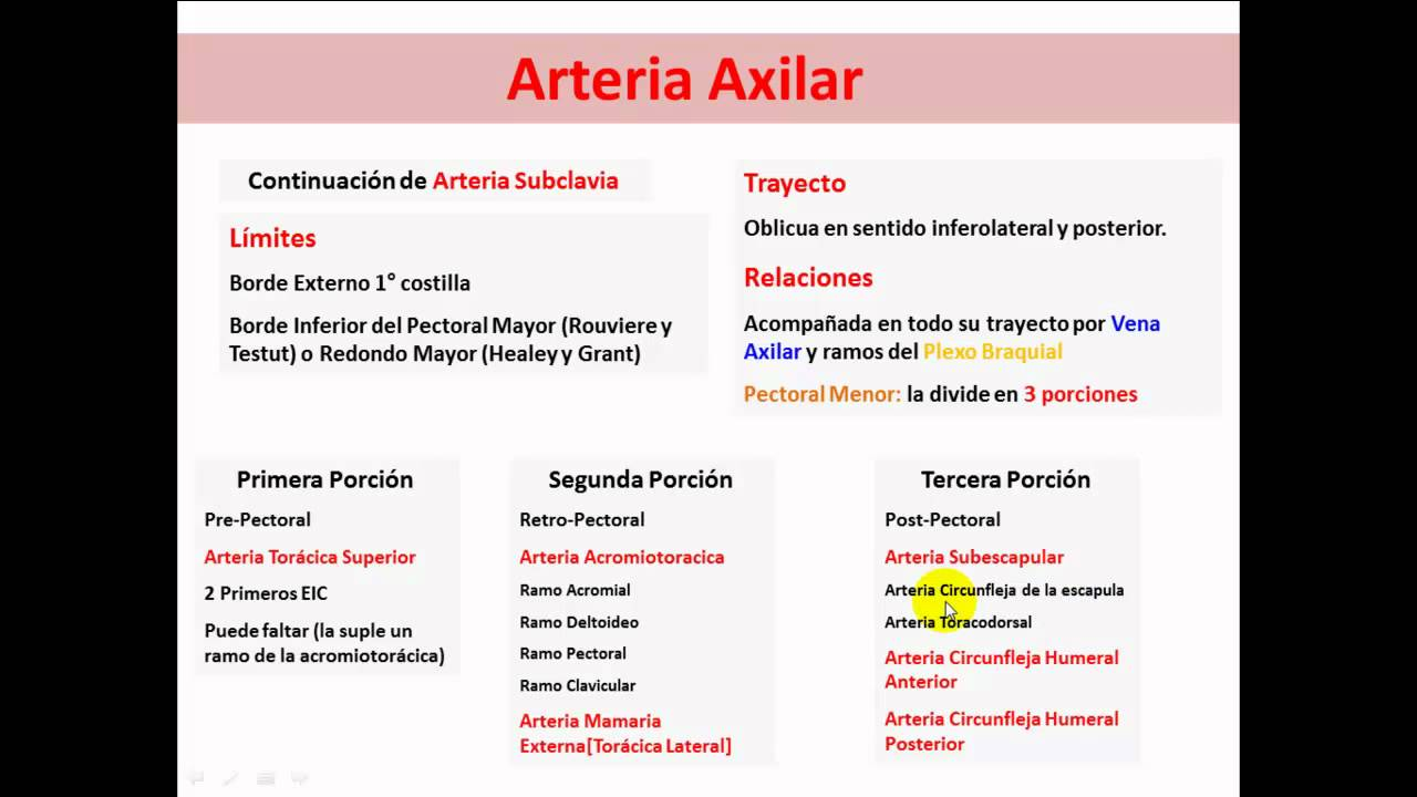 Arteria Axilar - YouTube