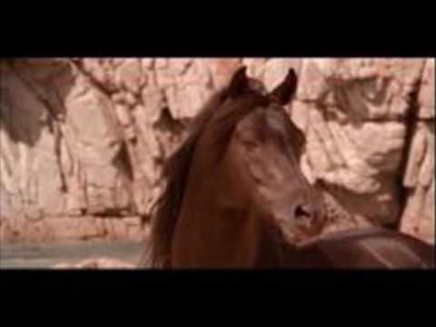 The Black Stallion - Main Theme -  Carmine Coppola