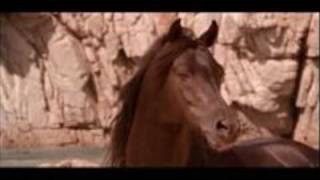 The Black Stallion - Main Theme -  Carmine Coppola