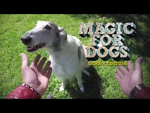 Magic for Dogs - GoPro Edition!