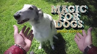 Repeat youtube video Magic for Dogs - GoPro Edition!