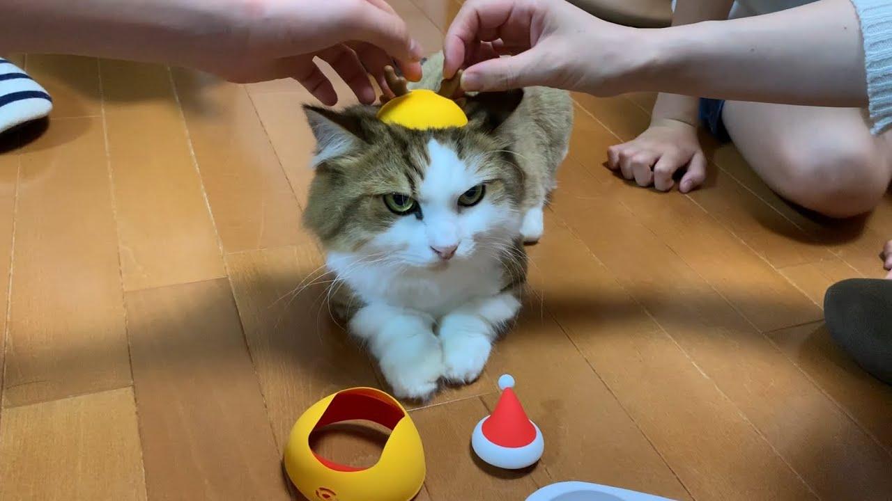 会話に呆れる猫がかわいい