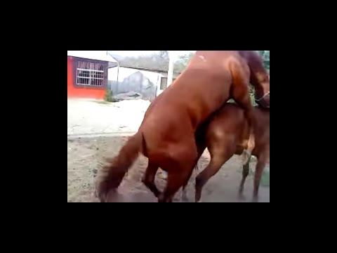Download Powerful meeting of horse.