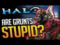 Are Halo's Grunts ACTUALLY Stupid? (or secretly smart?)