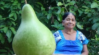 Healthy Village Foods ❤ Cooking Bottle Gourd Curry in my Village by my Mom