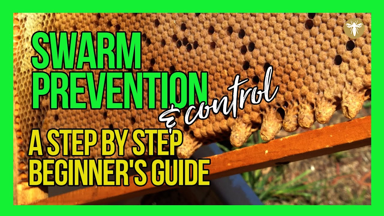 Download How to Prevent Swarming of Bees | Learn Step by Step with Bruce White