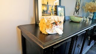 Cat Face Tissue Dispenser