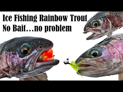 Ice Fishing Rainbow Trout : No Bait!!! (Selective Gear Rules)