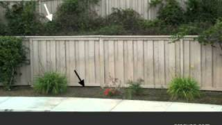 Watch This Video If You Have Plants Growing On Your Wood Fence