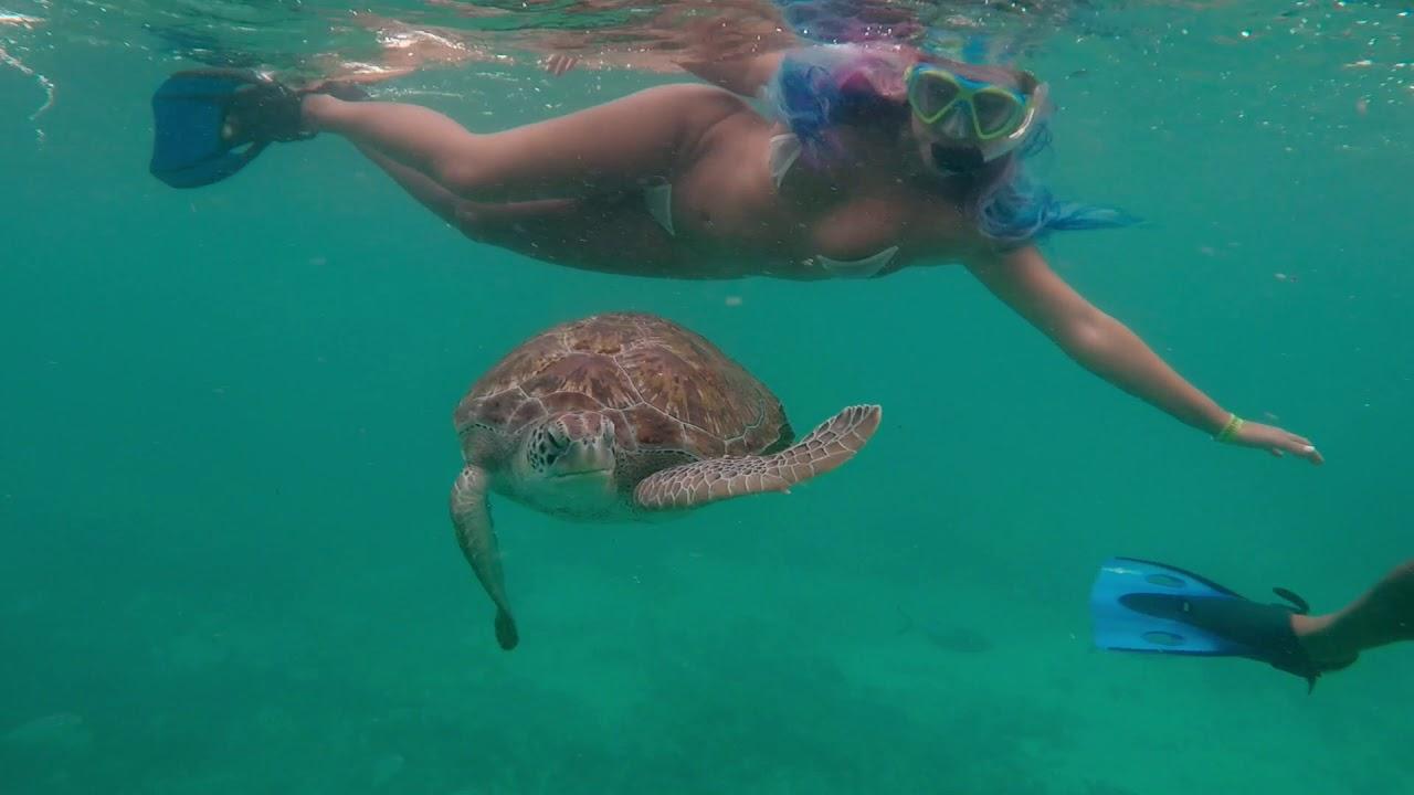Tulum Snorkel with Sea Turtles