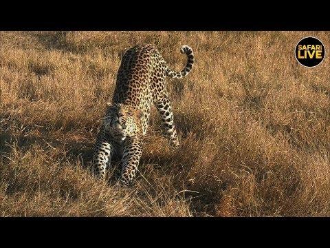 safariLIVE - Sunrise Safari - June 23, 2019