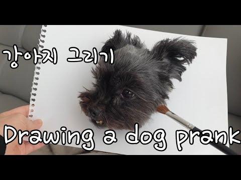 Drawing a dog prank 강아지를 그려보았는데..
