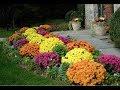 Цветочные идеи Как сажать цветы чтобы дача утопала в цветах