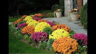 Цветы для клумбы на даче (45 фото): по оформление цветочной клумбочки в саду своими руками, фото и видео