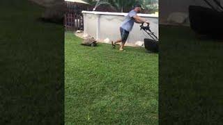 「どこまでだって追いかけるよ!」ウサギとカメならぬ芝刈り機とカメの追いかけっこ