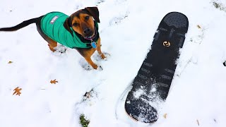 PUPPY SNOWSKATES FOR THE FIRST TIME!