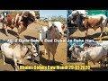 Ajj 2 Bulls Karachi se Dubai Gaye Bhains Colony Cow Mandi Karachi Latset Update 29 Jan 2020