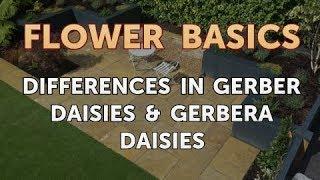 Gambar cover Differences in Gerber Daisies & Gerbera Daisies