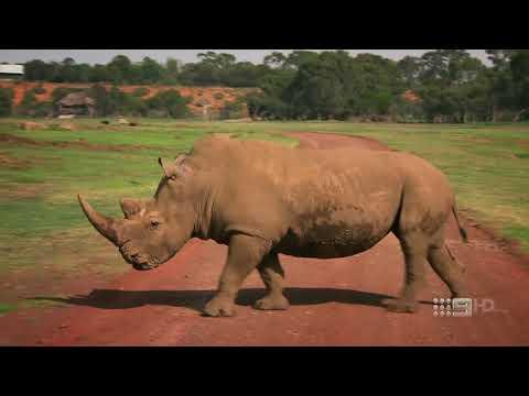 Worlds Greatest Animal Encounters Series 1 5of6 Grassland Animals