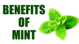 HEALTH BENEFITS OF MINT /PUDINA LEAVES..