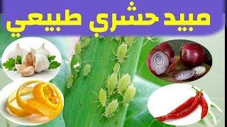 مبيد حشري طبيعي منزلي ضد المن و الحشرات فعال و آمن