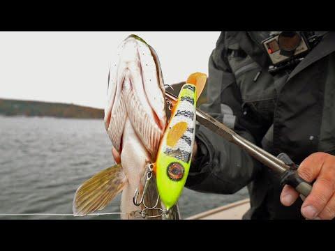 Pike Fishing Trout Lake