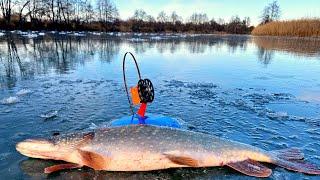 ПЕРВЫЙ ЛЕД 2020-2021. Щуки на жерлицы и балансиры! Рыбалка со льда!