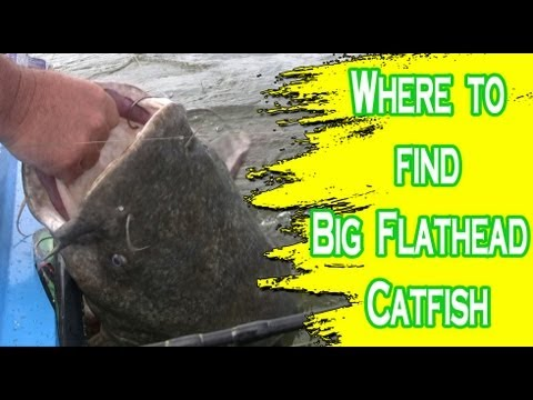 Places to look for flathead catfish on the Ohio River