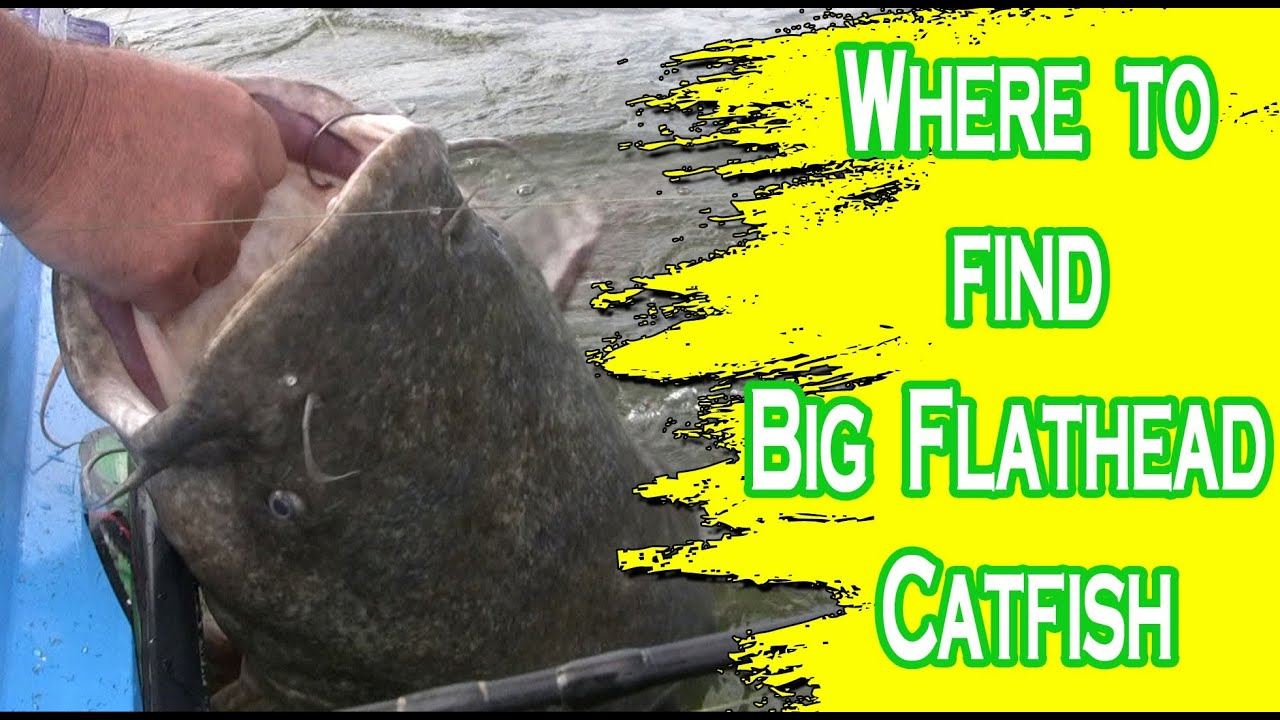 how to find catfish in a river